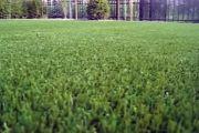 Ковролин искусственная трава